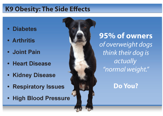 The Growing and Deadly Epidemic: K9 Obesity